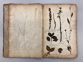 bound herbarium